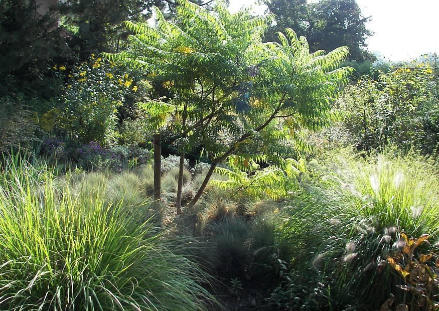 polsterartige bodendeckende gr serpflanzungen weiches graspolster im garten. Black Bedroom Furniture Sets. Home Design Ideas