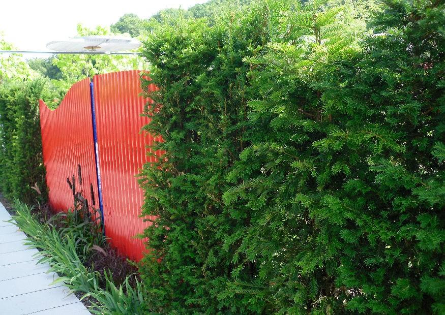 schnellwachsende immergrüne hecken, Gartenarbeit ideen