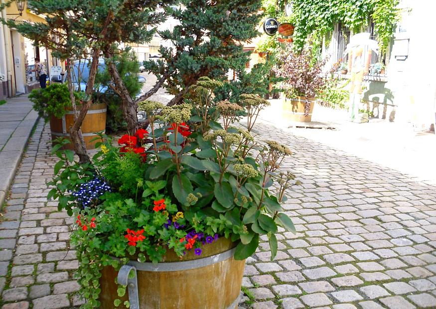 blumenk bel und pflanzk bel wirklich kaufen erst die bepflanzung bedenken. Black Bedroom Furniture Sets. Home Design Ideas